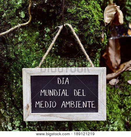 closeup of a wooden-framed chalkboard with the text dia mundial del medio ambiente, world environment day written in Spanish, hanging in the trunk of a tree in the forest