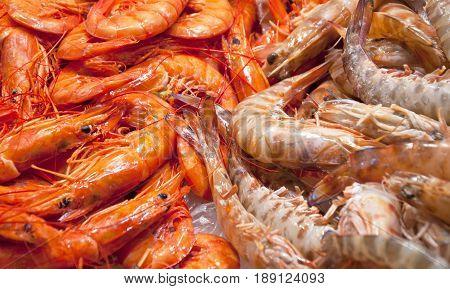 Close Up Fresh Shrimps On Display On Ice On Fishermen Market Store Shop. Shrimps - An Important Part Of Spanish Cuisine.