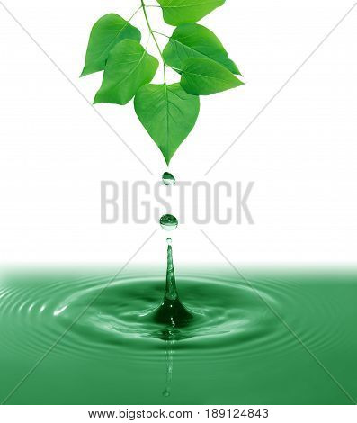 Twig with freshness green leaves above splashing water