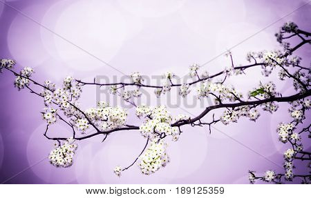 Spring flower branch with room for text with violet vignette