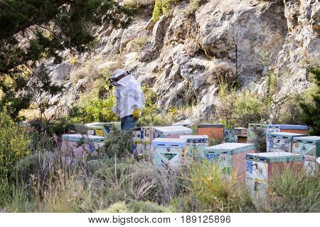 Cretan beekeeper among these hives in the mountain of the island