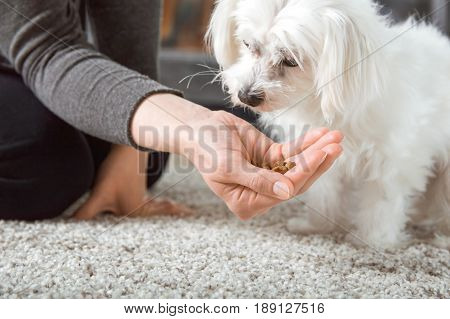 Woman Gives Food From The Hand To Her Dog