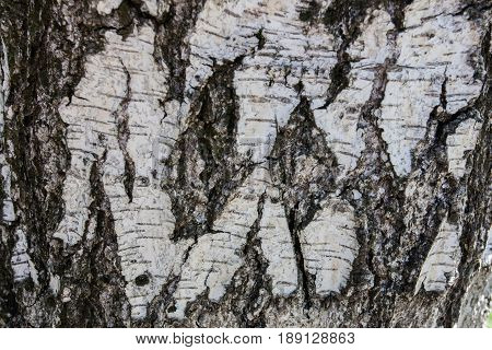 Tree bark texture Beautiful deep bark an old tree for texture design stock photo