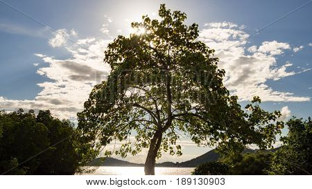 Big tree near river with aura sunlight beam and white cloud at sunset in summer.