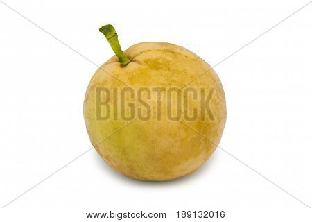 Young guava fruit isolated in white background. Fresh psidium guajava. Single yellow guava isolated on white with clipping path. Fruit with from tropical zone.
