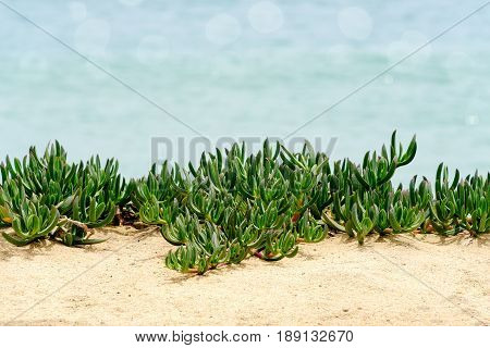 Green creeping plant growing on beach with soft bokeh room for your own words.