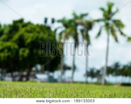 abstract soft focus and blury of green natural with tree grass and coconut