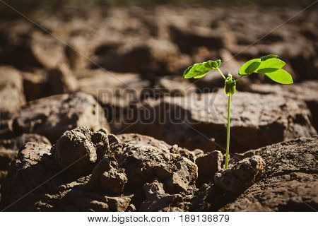 Little green plant in crack dry ground concept drought