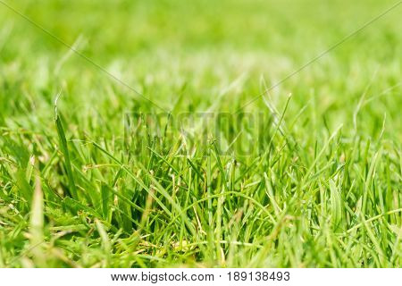 View on green Grass. Grassland. Close-up of blade of grass. Grass on a Meadow. Green Area