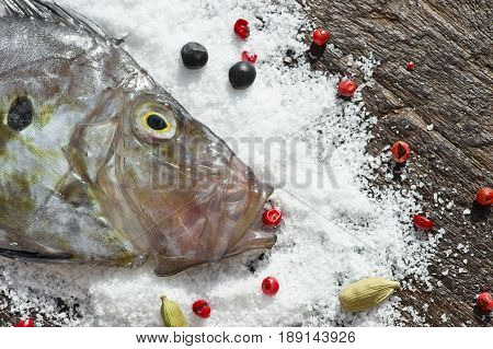 head of Zeus Faber fish on salt with spices (also known as John Dory gallo Pedro Saint Peter´s fish) close-up macro