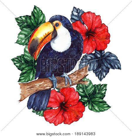 Watercolor exotic tropical animal bird toucan flower hibiscus isolated