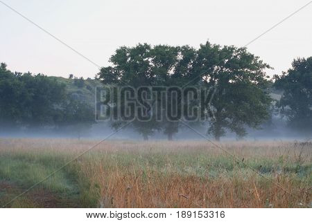 Three Poplars In The Morning Fog In The Fields Near The Hills