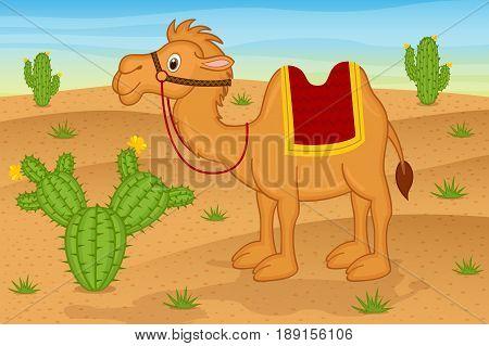 camel in desert  - vector illustration, eps