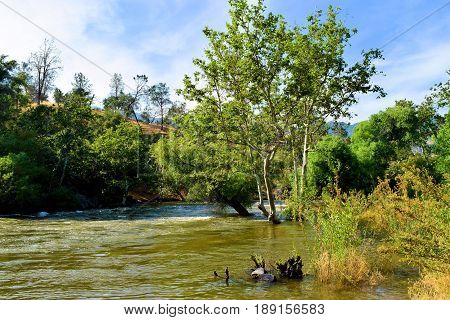 Kern River overflowing its banks from the Sierra Nevada Mountains snowmelt during spring taken in Kern County, CA