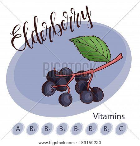 Vector fruit element of elderberry. Hand drawn icon with lettering. Food illustration for cafe, market, menu design