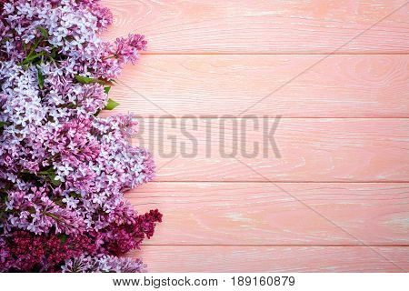 The beautiful lilac on a pink wooden background copy spase