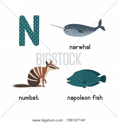Letter N. Cartoon alphabet for children. vector illustration animal numbat, narwhal, napoleon fish. isolated on white background