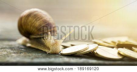Snail and golden coins closeup - money savings concept