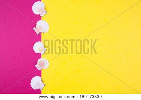 Sea Scallop Shells On Colored Backgrounds With Negative Space, Top View