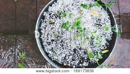 Plant in a pot destroyed by heavy hail storm. Top down view on pot with ice hail.