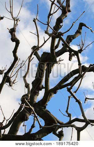 The black branch and blue sky in Wien