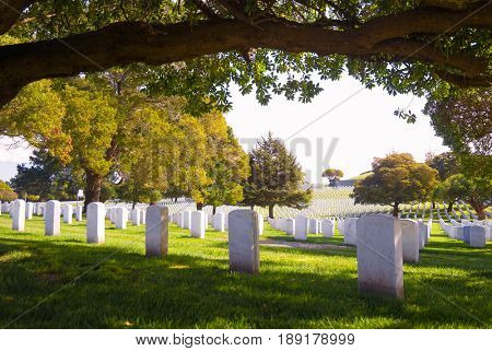 SAN BRUNO, CALIFORNIA, USA - October 27, 2009: Headstones lined up underneath a tree at the San Francisco National Cemetery