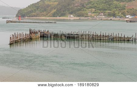 V-shaped bamboo trap set up in a fan shape used to catch fish.Taken in Namhae South Korea