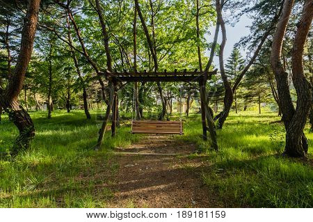 Wooden swing in a grove of evergreen trees with high green grass and a dirt path leading up to the swing.