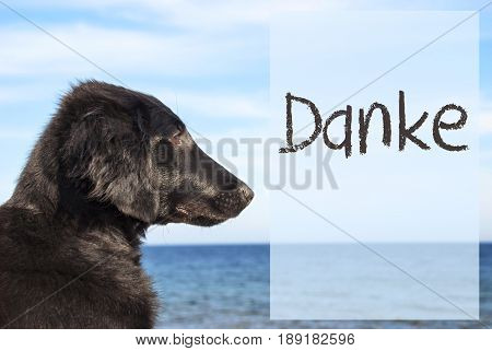German Text Danke Means Thank You. Flat Coated Retriever Dog Infront Of Ocean. Water In The Background
