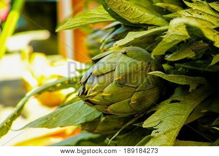 Fresh Green Artichokes Flower Heads With Leaves Ready To Cook Seasonal Food