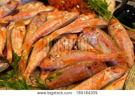 Сatch of fresh raw red mullet fish from Aegean sea Sicily Italy ready to cook on ice