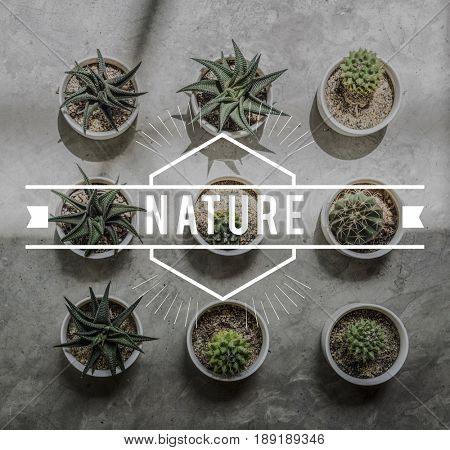 Botanic Nature Plant Environmental Conservation