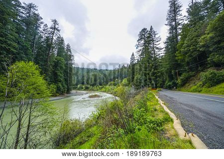 Beautiful natural landscape in the Redwood National Park - REDWOOD FOREST