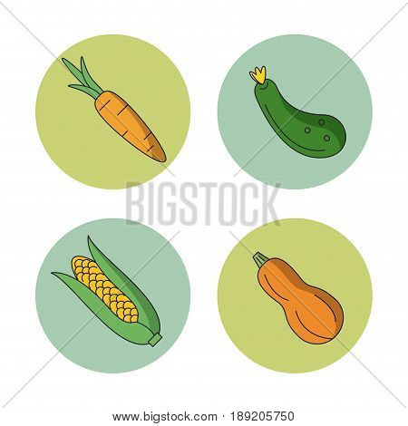 white background with vegetables carrot zucchini cucumber and cob corn in round frames vector illustration