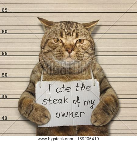 The bad cat stole and ate the steak of his owner.