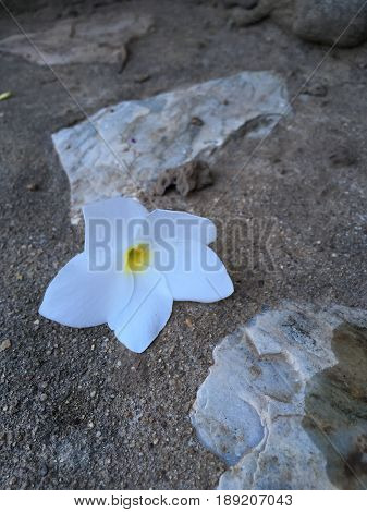 White flower on ground stone, feel alone