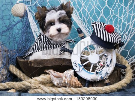 Beaver Terrier puppy and Sea decor