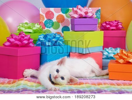 fluffy white kitten laying playful birthday presents boxes colorful bright vibrant pink purple green bows magenta blue balloons party celebration holiday fun cute fuzzy feline pet paws collar background cat present young animal beautiful small adorable ta