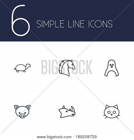 Set Of 6 Zoology Outline Icons Set.Collection Of Turtle, Rhino, Horse And Other Elements.