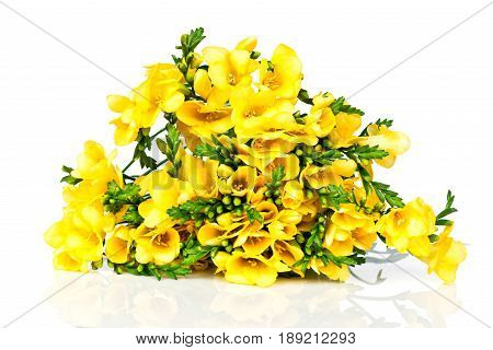 Photo of Yellow freesia flowers on white background