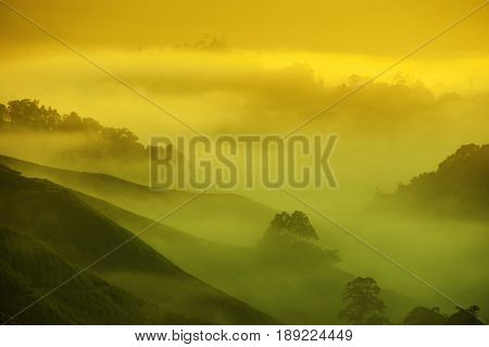 Tea farm in sunrise with misty golden sunlight at Cameron Highlands, Malaysia