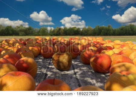 3d rendering of rotten apple in the middle of red apples on wooden planks