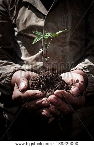 Dirty Hands Hold The Sprout With The Earth, The Concept Of Ecology, Birth, Success And The Environme