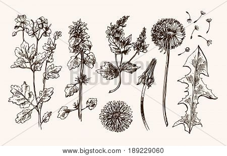 Hand drawn vector set with wildflowers. Decorative floral illustration. Sketch style. Us for skrapbuking, tissue, textile, cloth, fabric, web material