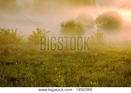 S0010_Pink Fog_0024_L