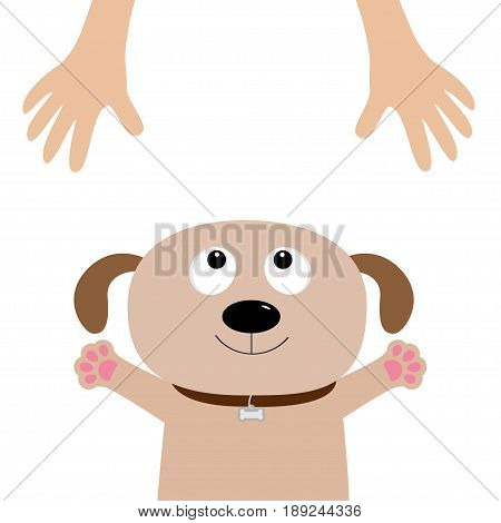 Dog face. Pet adoption. Puppy pooch looking up to human hand paw print hug. Flat design. Help homeless animal concept. Cute cartoon character. White background Isolated Vector