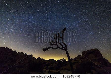 Night Sky Over Joshua Tree National Park, California