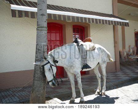 Saddled Horse Suffering In Sunshine