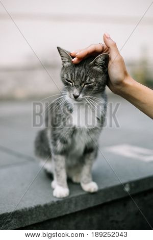 A girl stroking the head of a beautiful stray cat