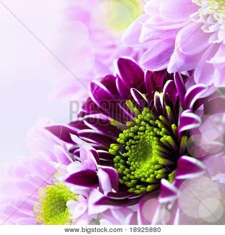 春天鲜花花束的特写